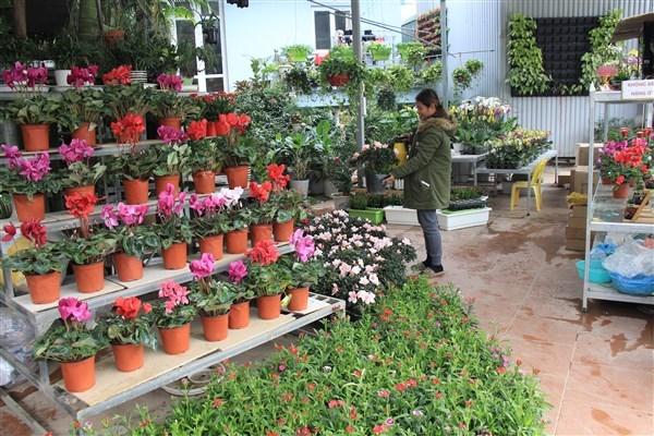 Nên kinh doanh gì ở nông thôn để mang lại lợi ích cao?
